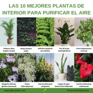 Las 10 mejores plantas de interior para purificar el aire